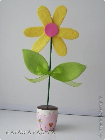 Вот такие разноцветные ромашки в горшочках выросли вслед за тюльпанами. фото 5