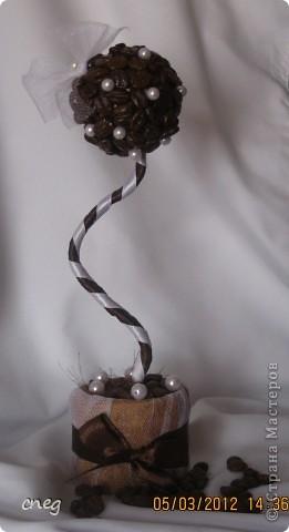 """Кофейное деревце """"Кокетка"""" фото 1"""