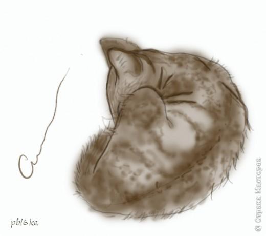 мои коты-кошки фото 6