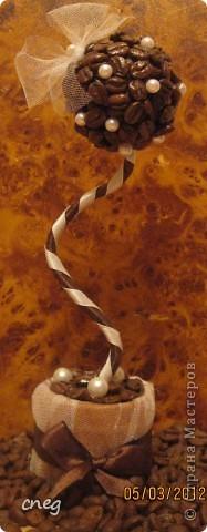 """Кофейное деревце """"Кокетка"""" фото 2"""