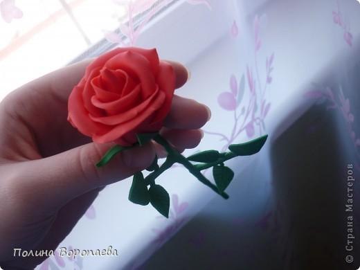 """Первый """"серьезный"""" цветок :) фото 1"""