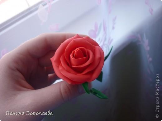 """Первый """"серьезный"""" цветок :) фото 3"""