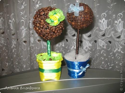Мои кофейные деревца :-) фото 2