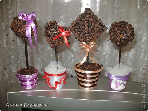 Мои кофейные деревца :-) фото 3