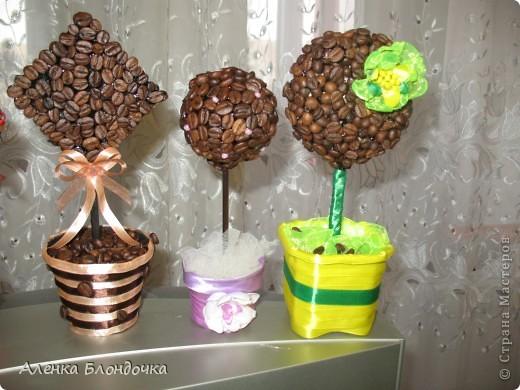 Мои кофейные деревца :-) фото 5