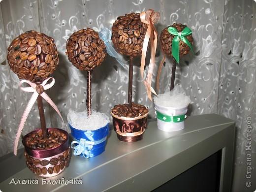Мои кофейные деревца :-) фото 6