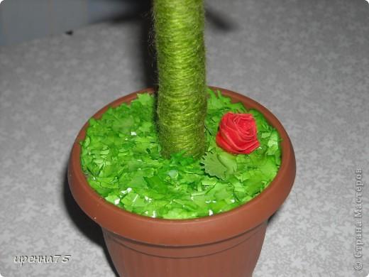 На этом небольшом деревце поселилось 140 роз. фото 3