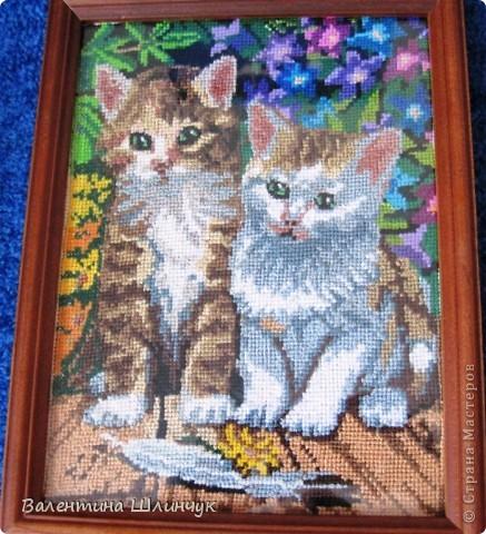 Котики... фото 1
