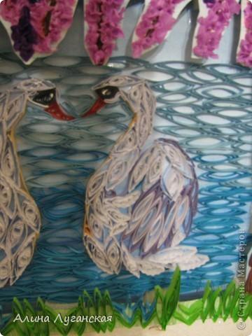 Танцующие лебеди, в арке из глицинии, вид с берега. фото 3