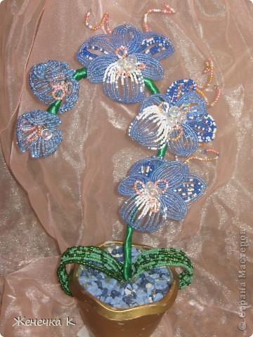 Орхидея для АНГЕЛА. фото 2
