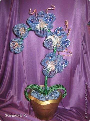 Орхидея для АНГЕЛА. фото 3