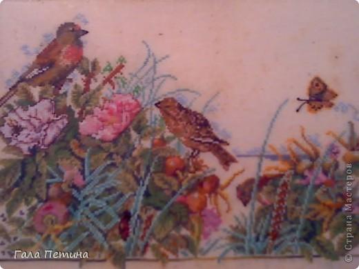 Птицы в поле