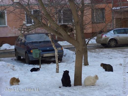 """Наконец-то все почувствовали приближение весны! Солнце печёт, ручьи журчат, птицы щебечут, люди и коты вышли на улицу. Вот что мы увидели во дворе. """"Голосую за ВЕСНУ даже задней лапой!""""  фото 12"""