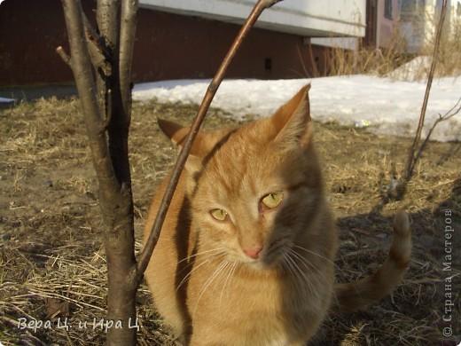 """Наконец-то все почувствовали приближение весны! Солнце печёт, ручьи журчат, птицы щебечут, люди и коты вышли на улицу. Вот что мы увидели во дворе. """"Голосую за ВЕСНУ даже задней лапой!""""  фото 8"""