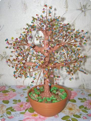 Радужное деревце фото 1
