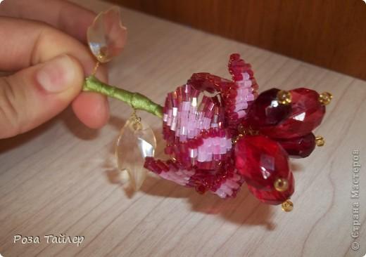 Аленький цветочек фото 3