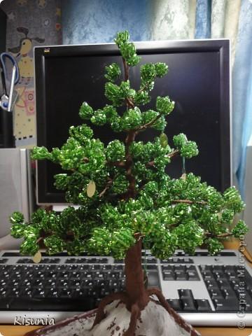 Моё первое дерево фото 1