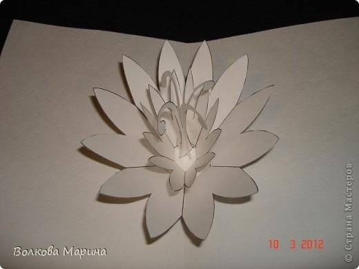 Это разновидность киригами. Из бумаги делаются объёмные изделия (имеющие сетчатую структуру), при этом их можно легко сложить и они будут плоские как лист бумаги. Так же легко восстанавливают свой объёмный вид. Очень удобно использовать в поздравительных открыточках. Я решила собрать коллекцию. Можно сказать это образцы для будующих работ.  фото 17