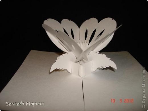 Это разновидность киригами. Из бумаги делаются объёмные изделия (имеющие сетчатую структуру), при этом их можно легко сложить и они будут плоские как лист бумаги. Так же легко восстанавливают свой объёмный вид. Очень удобно использовать в поздравительных открыточках. Я решила собрать коллекцию. Можно сказать это образцы для будующих работ.  фото 19