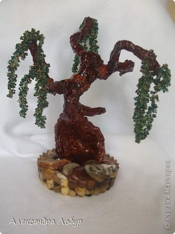 Ива,очень надеюсь что похоже мое деревце на ивушку фото 6