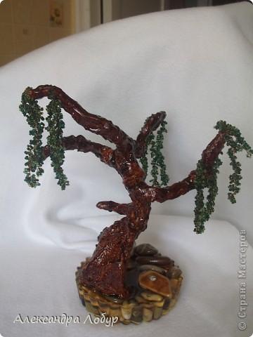Ива,очень надеюсь что похоже мое деревце на ивушку фото 4