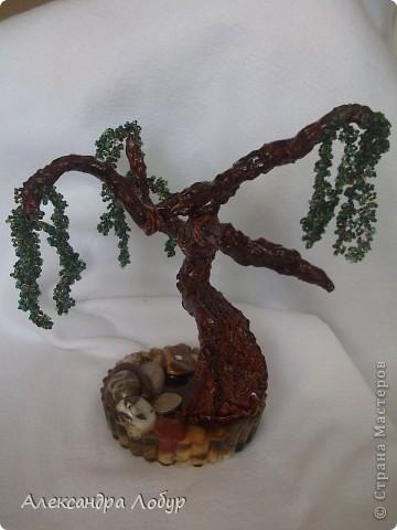 Ива,очень надеюсь что похоже мое деревце на ивушку фото 2