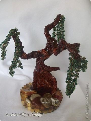 Ива,очень надеюсь что похоже мое деревце на ивушку фото 1