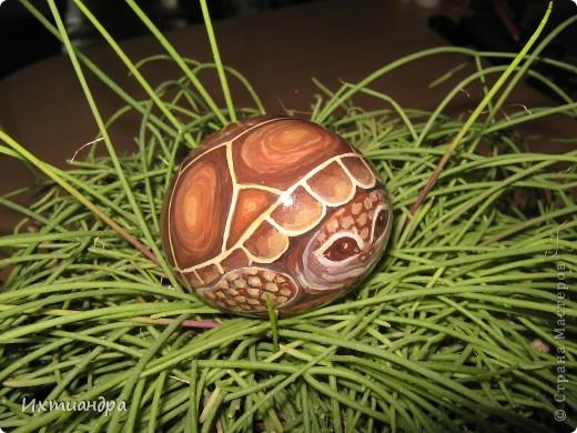 Ура! В моей коллекции появилась новая черепашка! Не могу без умиления на неё смотреть. А нарисована она на простом камушке, привезённом с моря более 3 лет назад. фото 14