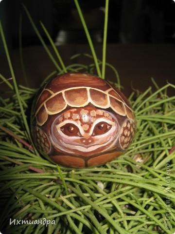 Ура! В моей коллекции появилась новая черепашка! Не могу без умиления на неё смотреть. А нарисована она на простом камушке, привезённом с моря более 3 лет назад. фото 16