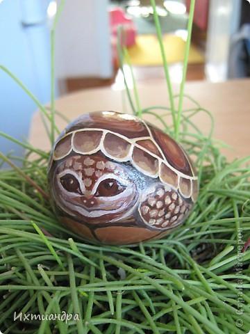Ура! В моей коллекции появилась новая черепашка! Не могу без умиления на неё смотреть. А нарисована она на простом камушке, привезённом с моря более 3 лет назад. фото 17