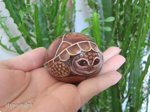 Ура! В моей коллекции появилась новая черепашка! Не могу без умиления на неё смотреть. А нарисована она на простом камушке, привезённом с моря более 3 лет назад. фото 1