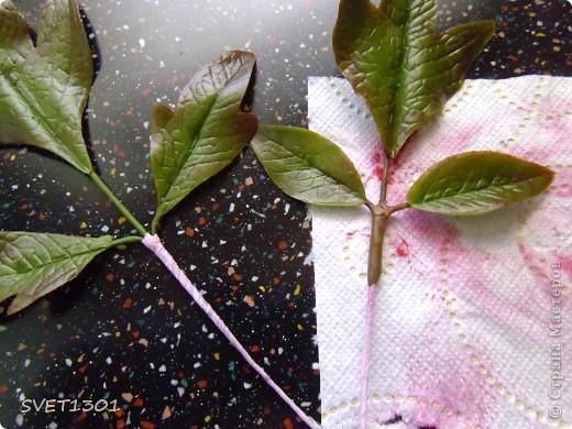 Мастер-класс Лепка Древовидный пион МК Фарфор холодный фото 17