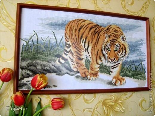 """Моя первая картина """"Тигр"""""""