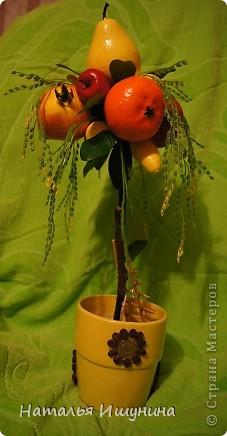 топиарий (фруктарий)))) фото 1