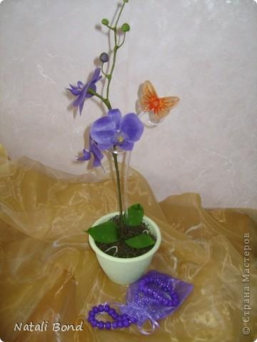 Доброго дня Всем!!!!Скуки ради просматривая страницы интерна,решила полюбоваться  маками,вот что из этого получилось......,гвоздику пробовала тоже ,но если честно мне не очень...,ну и орхидейки  так тоже...от скуки ,что получилось ...предлагаю прогуляться у меня!!!Приятного просмотра!!! фото 7