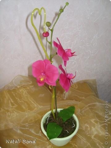 Доброго дня Всем!!!!Скуки ради просматривая страницы интерна,решила полюбоваться  маками,вот что из этого получилось......,гвоздику пробовала тоже ,но если честно мне не очень...,ну и орхидейки  так тоже...от скуки ,что получилось ...предлагаю прогуляться у меня!!!Приятного просмотра!!! фото 8