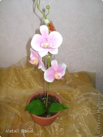 Доброго дня Всем!!!!Скуки ради просматривая страницы интерна,решила полюбоваться  маками,вот что из этого получилось......,гвоздику пробовала тоже ,но если честно мне не очень...,ну и орхидейки  так тоже...от скуки ,что получилось ...предлагаю прогуляться у меня!!!Приятного просмотра!!! фото 9