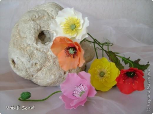 Доброго дня Всем!!!!Скуки ради просматривая страницы интерна,решила полюбоваться  маками,вот что из этого получилось......,гвоздику пробовала тоже ,но если честно мне не очень...,ну и орхидейки  так тоже...от скуки ,что получилось ...предлагаю прогуляться у меня!!!Приятного просмотра!!! фото 3