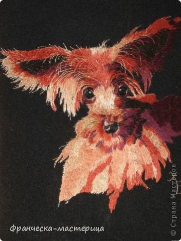 """Кот породы """"Пикси"""". Размер 20х29 см. 32 оттенка цвета. Авторская работа в единственном экземпляре.  фото 3"""
