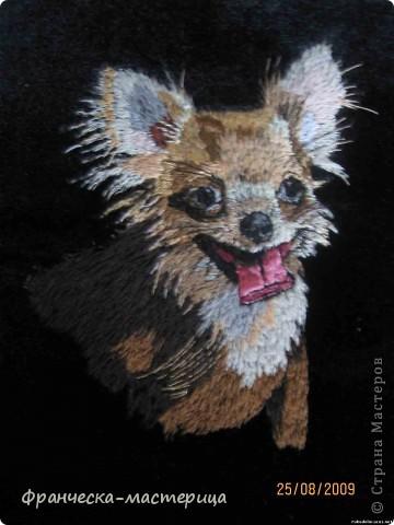 """Кот породы """"Пикси"""". Размер 20х29 см. 32 оттенка цвета. Авторская работа в единственном экземпляре.  фото 4"""