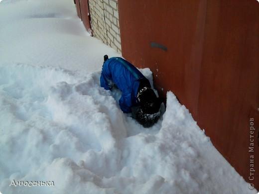 Всем привет! Меня зовут Боник! Вчера у нас выпало ооочень много снега и я и мои хозяева пошли чистить снег около гаража, я очень люблю ходить в гараж, там всегда такие большие кучи снега в которых я люблю рыть норы, ведь я же норная собака. фото 6