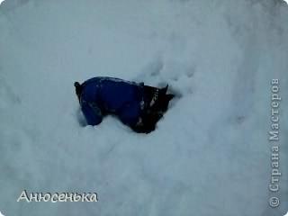 Всем привет! Меня зовут Боник! Вчера у нас выпало ооочень много снега и я и мои хозяева пошли чистить снег около гаража, я очень люблю ходить в гараж, там всегда такие большие кучи снега в которых я люблю рыть норы, ведь я же норная собака. фото 2