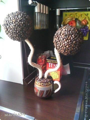 вот и у меня появилось кофейное дерево