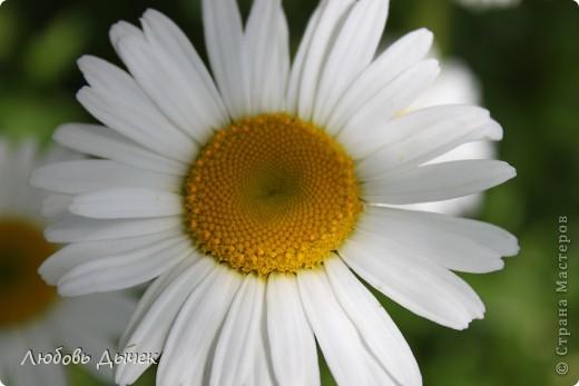 За окном вьюга.Зима не хочет уступать свои позиции.А я приглашаю вас в мой цветочный рай, чтобы вы могли насладиться красотой яркого летнего сада. фото 8