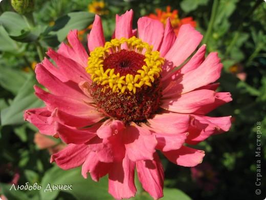 За окном вьюга.Зима не хочет уступать свои позиции.А я приглашаю вас в мой цветочный рай, чтобы вы могли насладиться красотой яркого летнего сада. фото 31