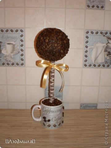 Моё первое кофейное дерево фото 1