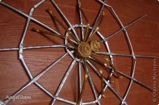 Золотой паучок фото 1