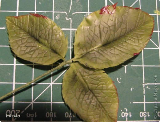 Мастер-класс Поделка изделие Флористика искусственная Лепка лист розы-вариант с вклееной проволокой Фарфор холодный фото 13