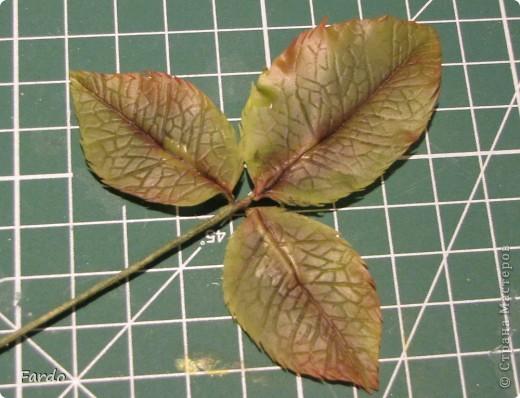 Мастер-класс Поделка изделие Флористика искусственная Лепка лист розы-вариант с вклееной проволокой Фарфор холодный фото 1