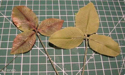 Мастер-класс Поделка изделие Флористика искусственная Лепка лист розы-вариант с вклееной проволокой Фарфор холодный фото 16